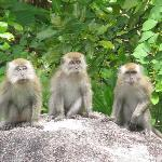 Cheeky Monkeys at Bagus Place