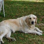 Bob's dog!