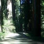 Howland Hill Rd in Jebediah Smith Redwoods
