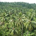 ...veduta delle cascate...vegetazione a Koh Samui