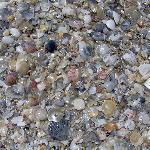 Lots of Shells
