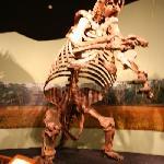 Sloth bones