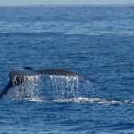 Whale watching fare meherio motu temae Moorea