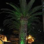 palm tree near dinner area