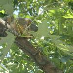 My friendly squirrel again