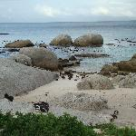 Penguin Colony - Just South of Simonstown
