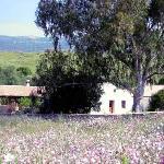 Cortijo Wildflower Meadow