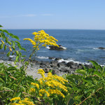 Goldenrod and blue seas