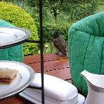 Afternoon tea with bird