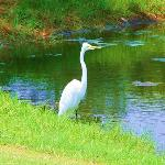 Bird alongside a little pond.