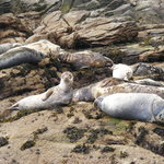 Seals on the Eastern Isles