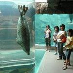 Asahiyama Zoo
