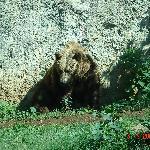Zoo in Villa Borghese