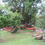 hotel hammocks