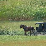 Buggy ride at Yoder's Farm