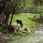 Opposite river bank, Belisirma