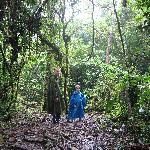 promenade dans la forêt !