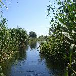 Foto de Danube Delta
