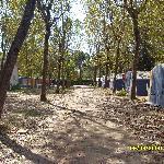 Foto di Camping Ca' Savio