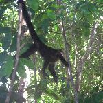 Monkeys on the property