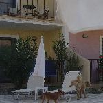 Streunende Hunde pinkeln zu Liegen (wild dogs!!)
