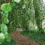 Entering the tree garden at Adare