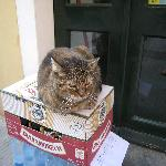 One of the many cats of Vernazza