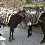 lindos donkeys (light people only please!)