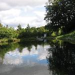 Pond from Dock, View 1