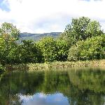 Pond from Dock, View 2