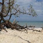 more G. beach