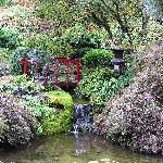 In the Japanese Garden