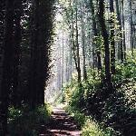 Woodland Walk or Cycle to the beach