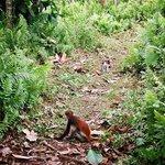 Jozani Forest Reserve