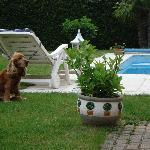 Nico il cane