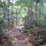 Imagen de Bukit Timah Nature Reserve