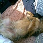 relax anche per il mio cane