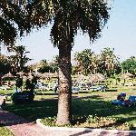 Grassy sunbathing area next to the pool