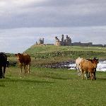 Northumberland Coatline