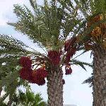 palmiers à l'entrée de l'hôtel