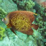 Fantastic underwater