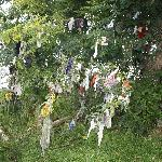 Ireland: co. Meath - Fore: the Rag Tree