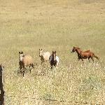 Φωτογραφία: Chewack River Guest Ranch