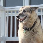 Rex- Dog at Chalet Killington