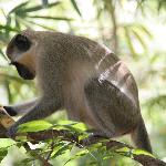 Green Monkey, vor den Apartments