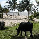 Photo de Hotel Ilha do Marajo