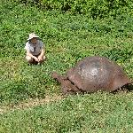 Encountering giant tortoises in the highlands