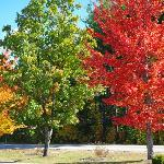 awesome colorful trees