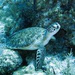 Great divingfun