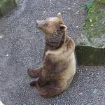 熊公園の熊